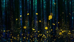 Your Firefly – ヽ(○^㉨^)ノ♪